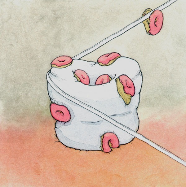 donut, the way your body works