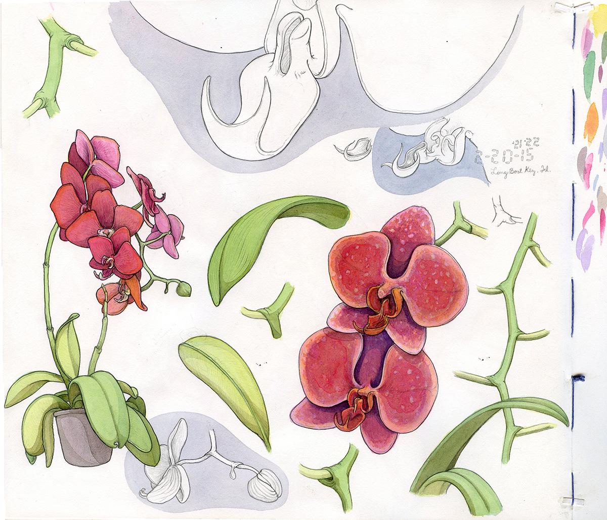 sketchbook_orchids_web.jpg