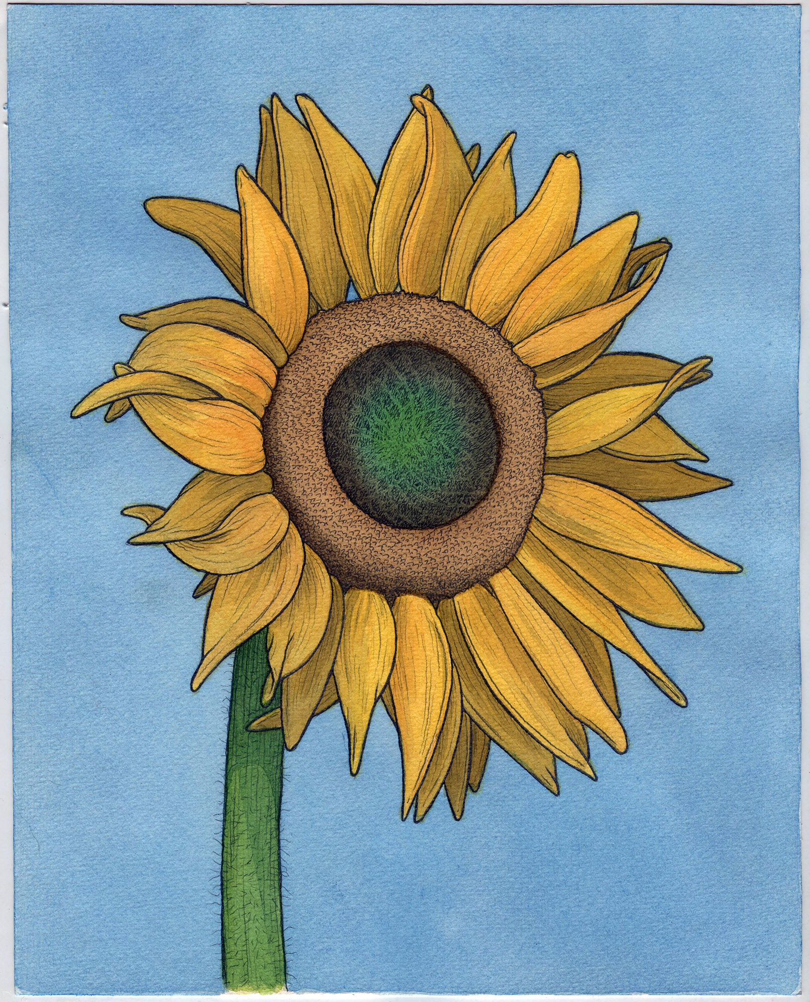 "Sunflower 8"" x 10"""