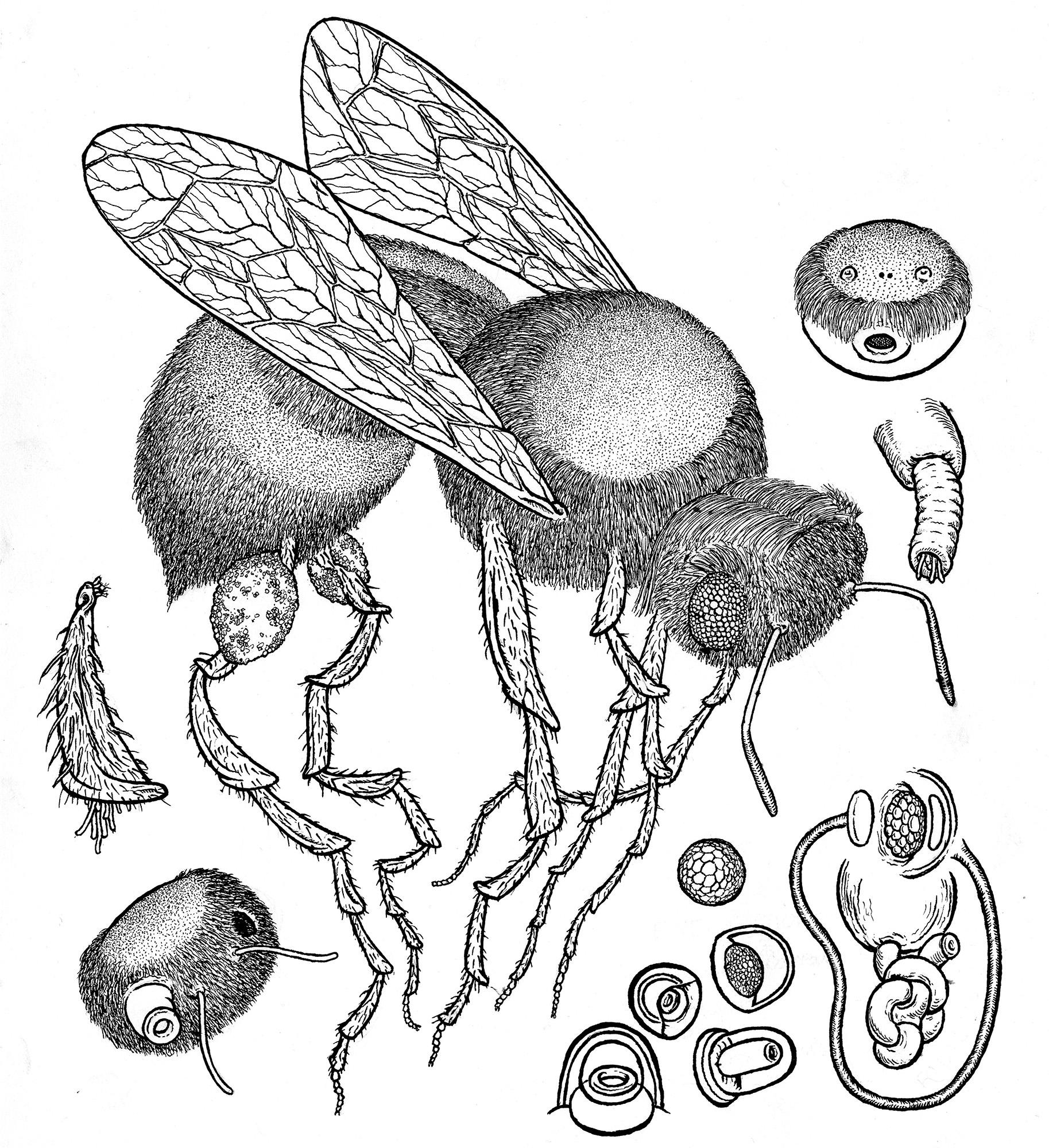 dangleg monkbee ink web.jpg