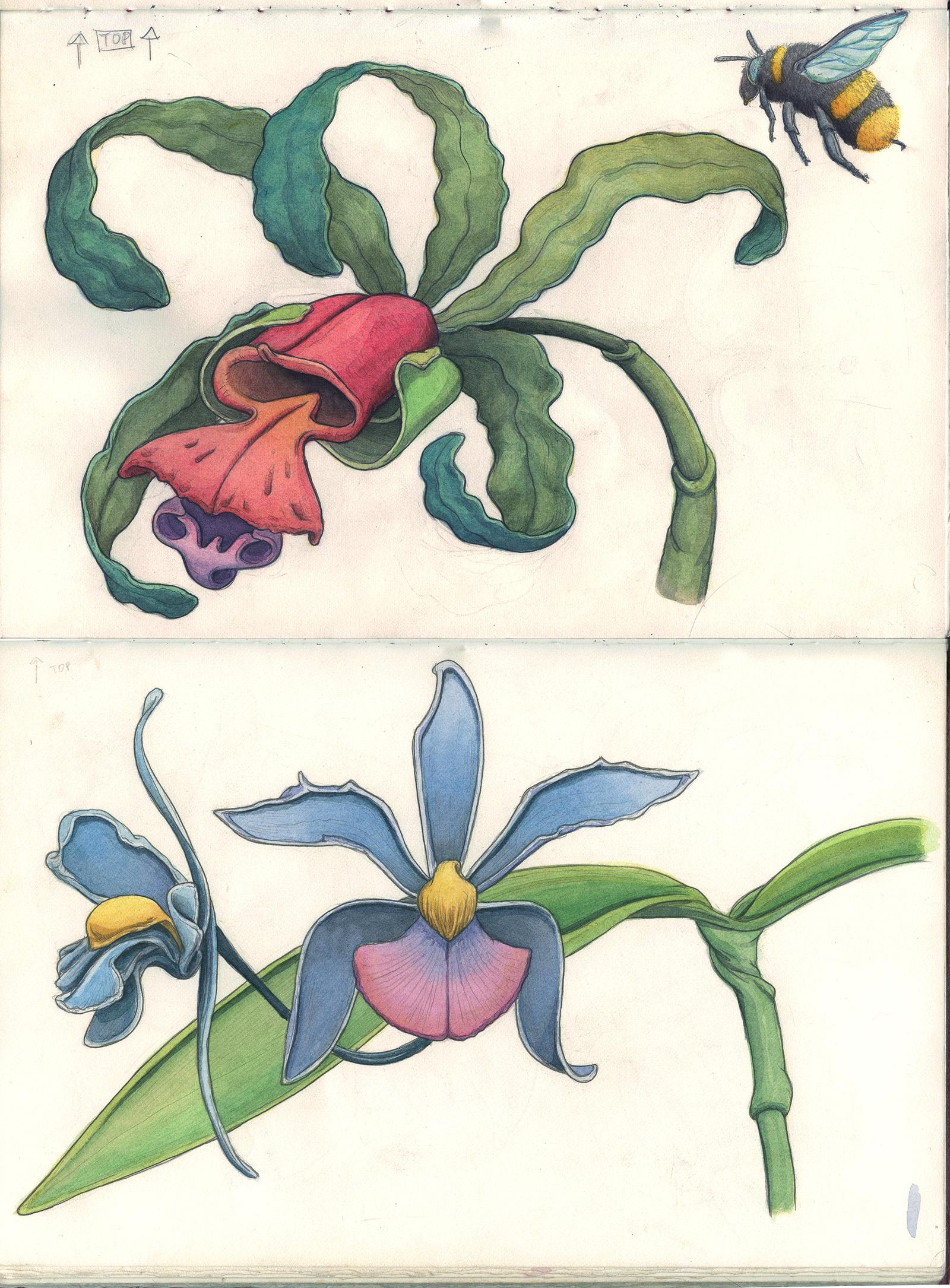sketchbook-lilys-b.jpg