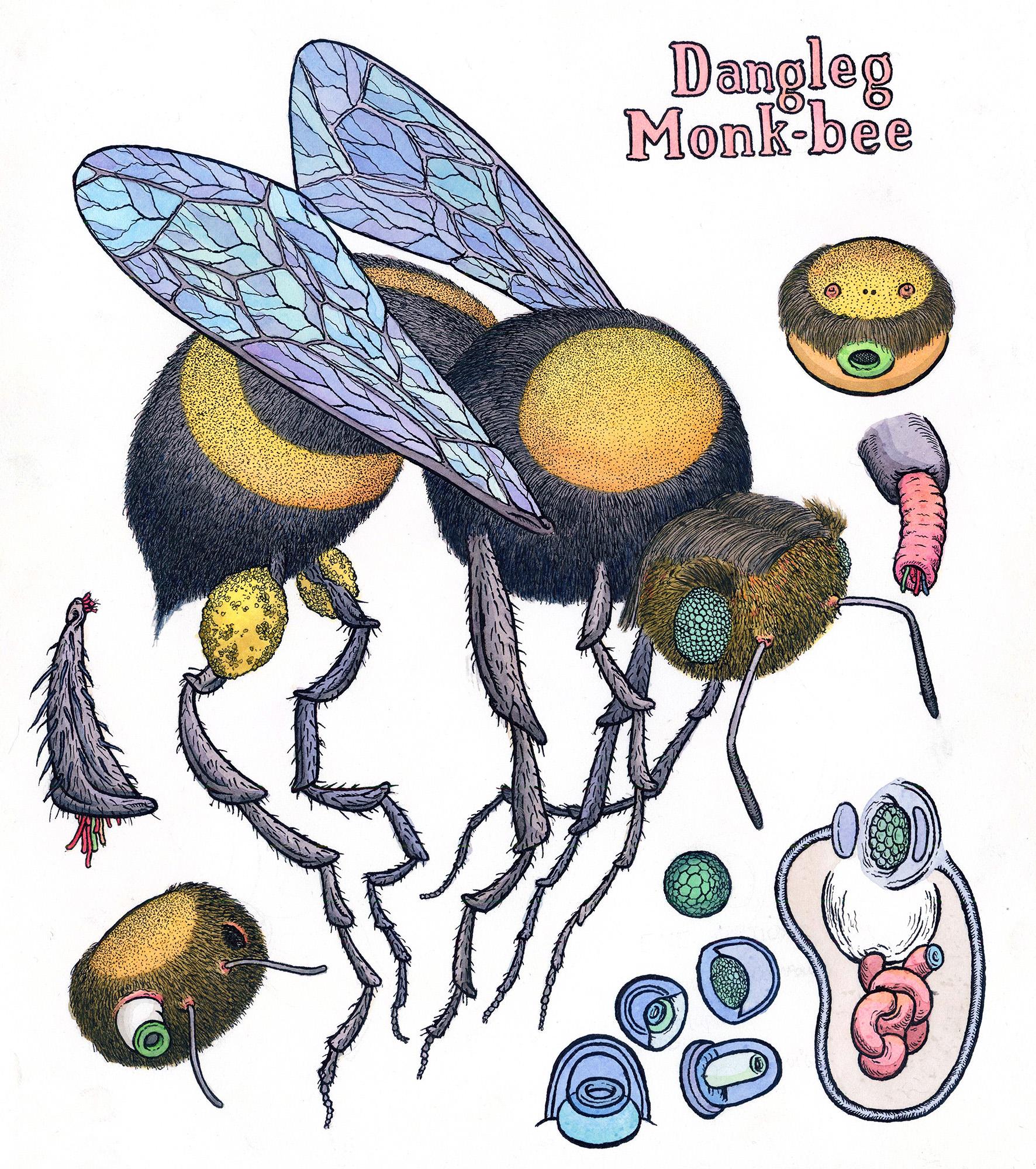 Dangleg Monk-bee, 2018