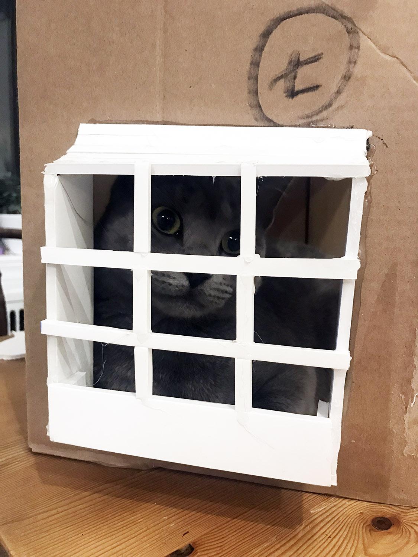 kitty bay window.jpg
