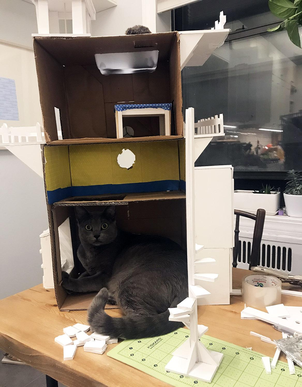kitty inside.jpg