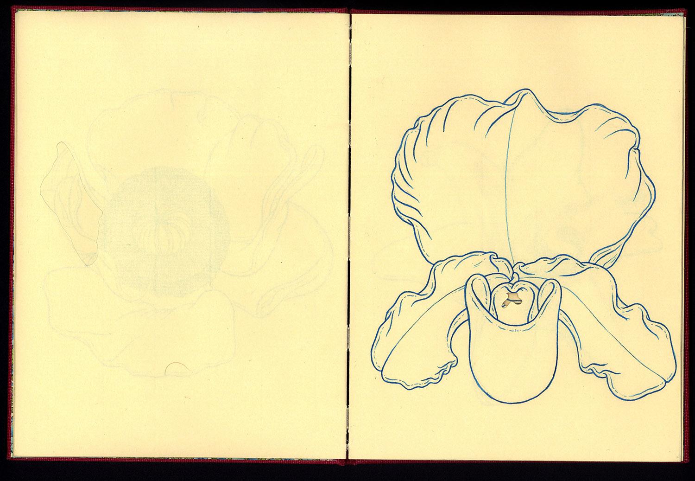 Phanerozoic Eon Page 6.jpg