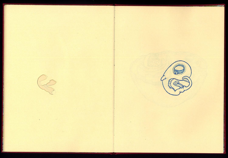 Phanerozoic Eon Page 11.jpg