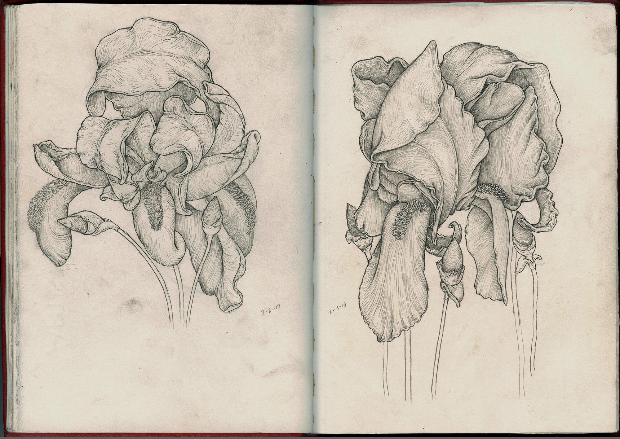 2 flowers graphite sketchbook SQ2.jpg