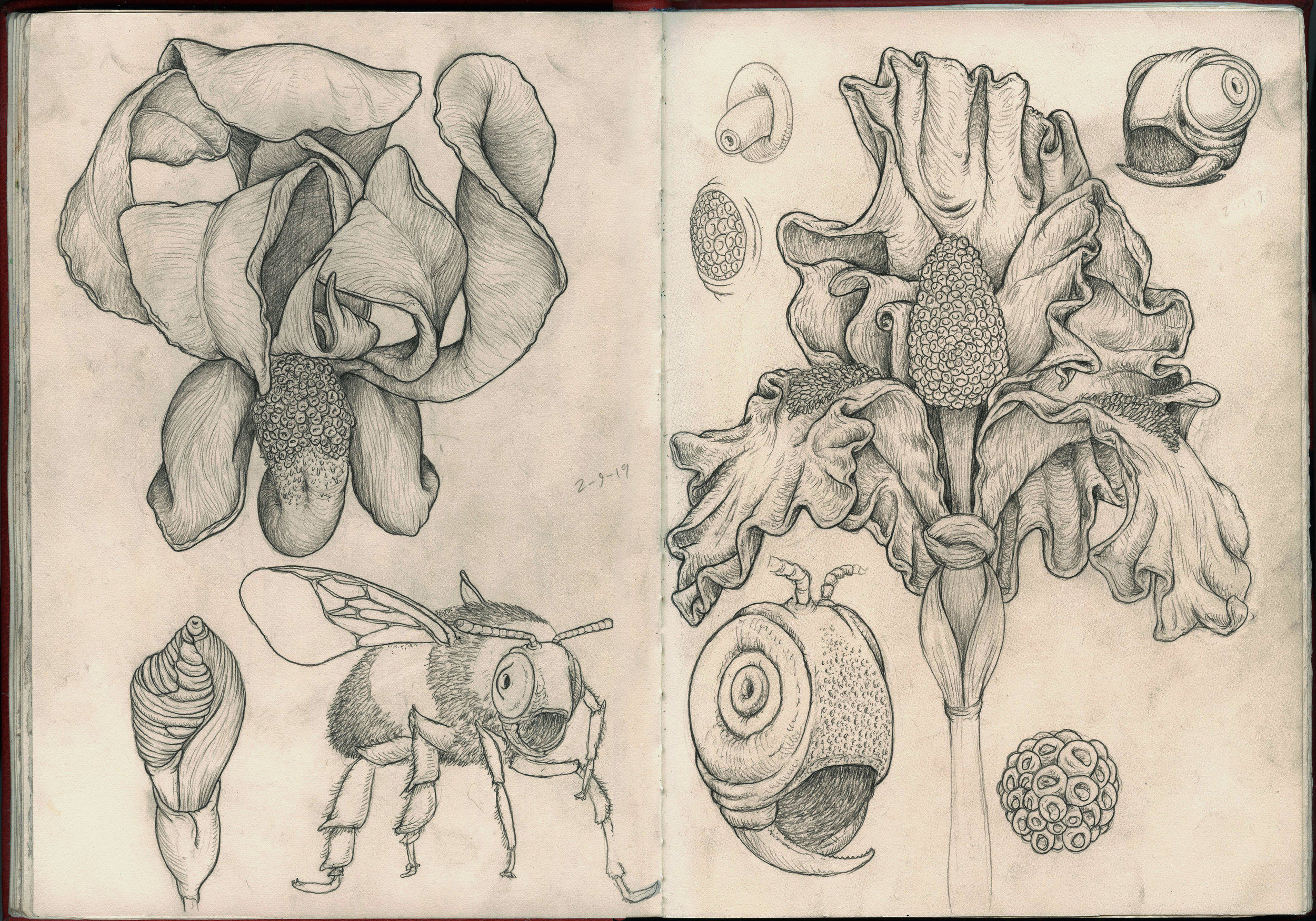 bee heads sketchbook.jpg