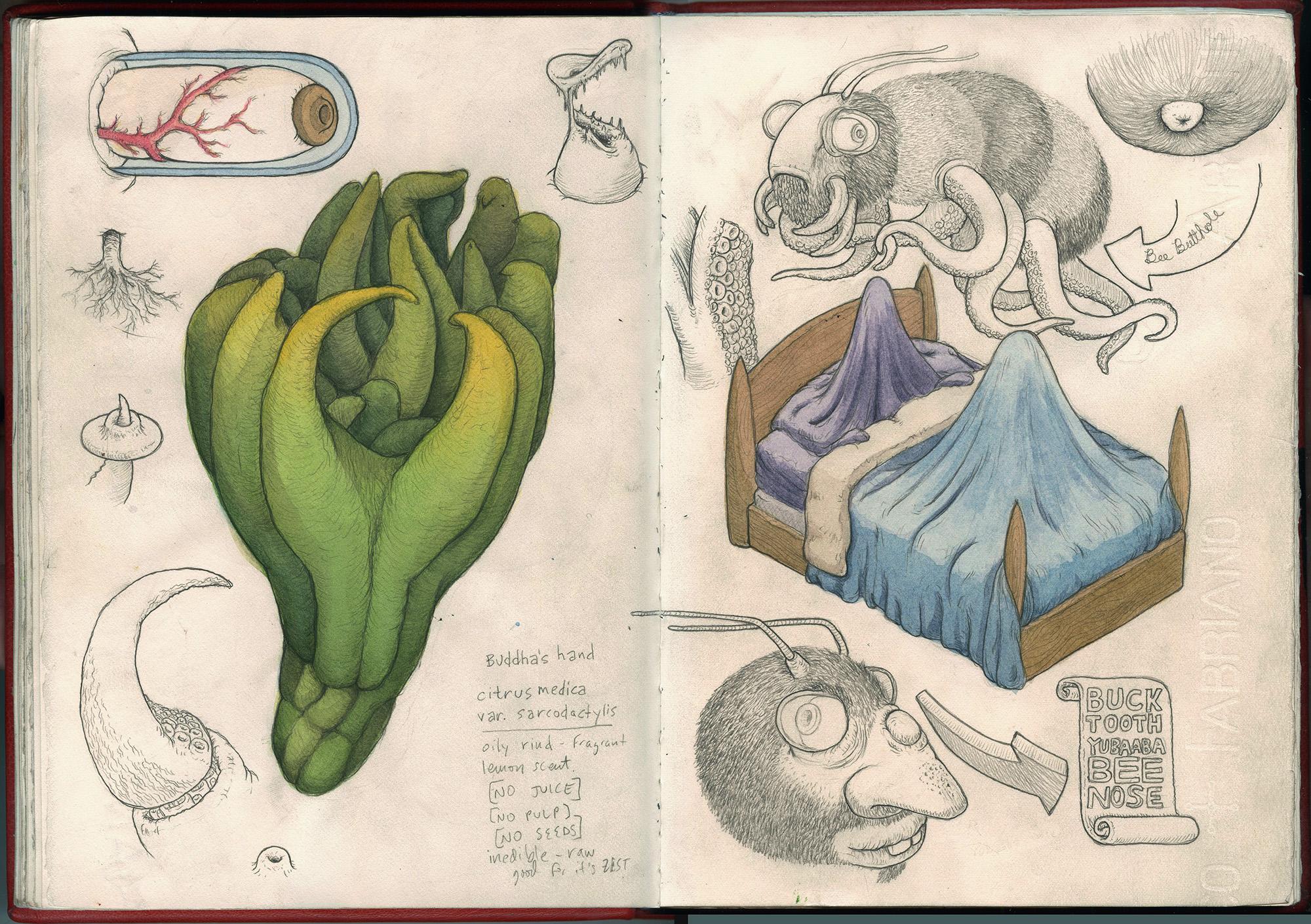 buddhas hand sketchbook-web.jpg