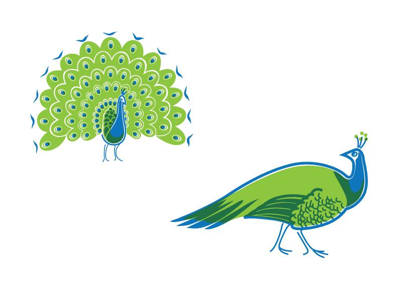 PeacockIllustration.jpg