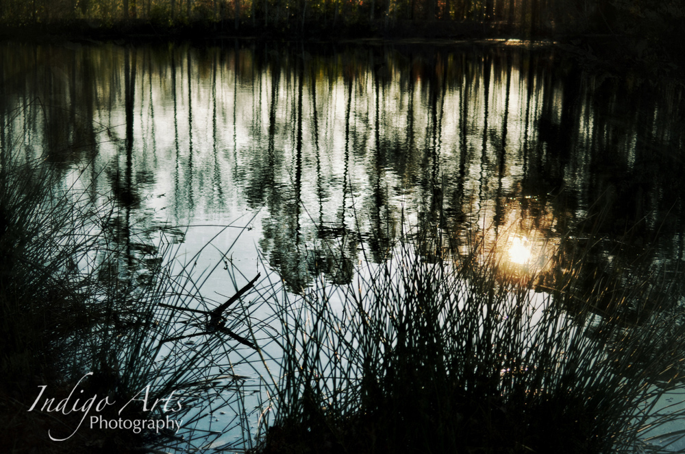 Pond Reflections