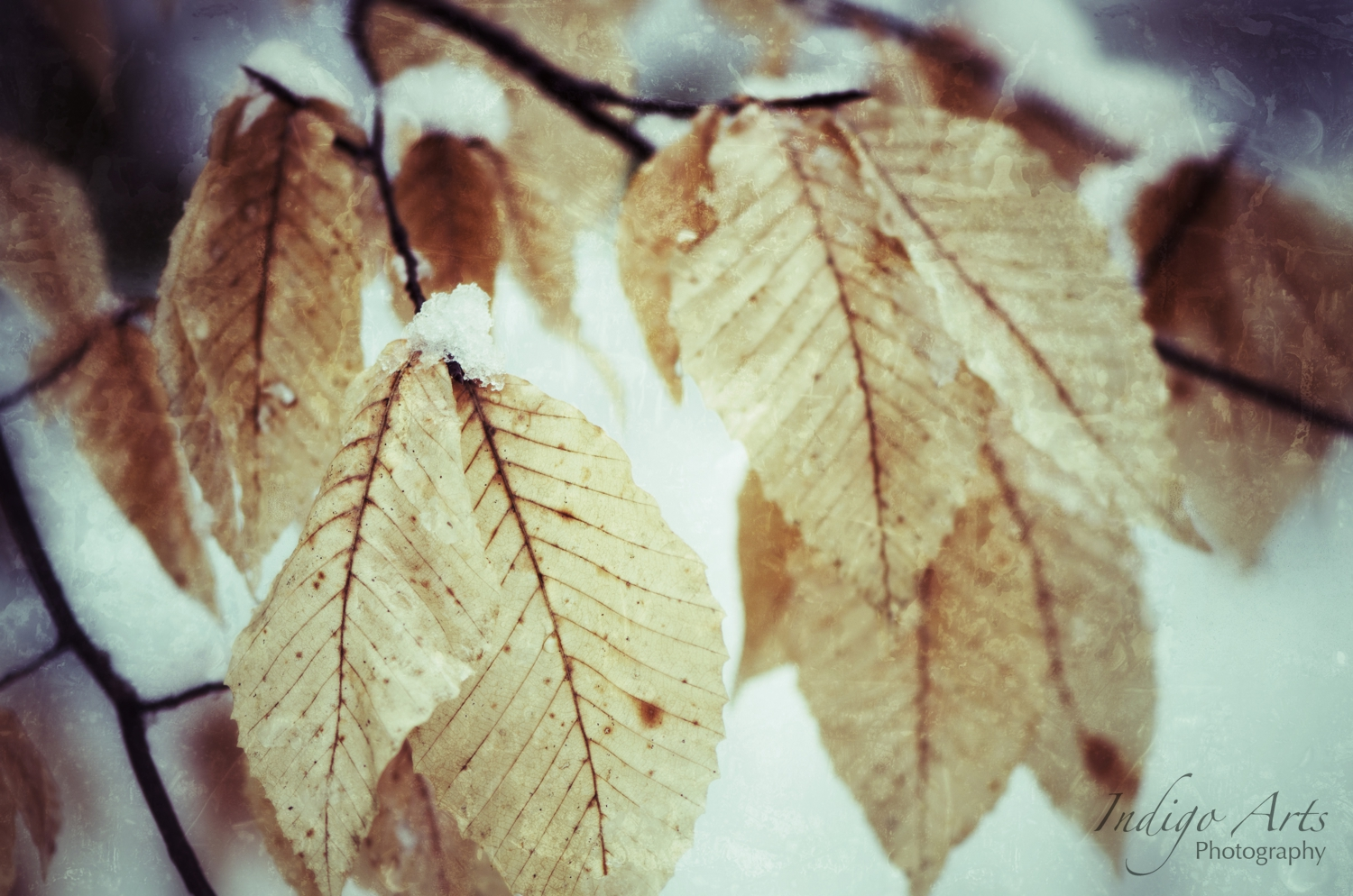 grunge leaves in snow