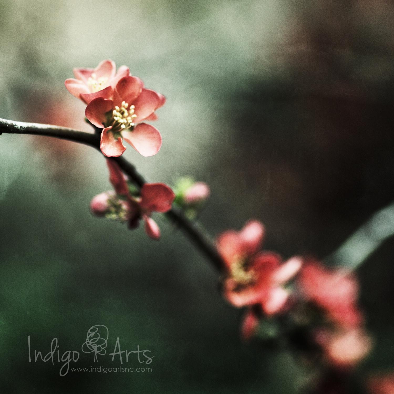 red flower in coker arboretum