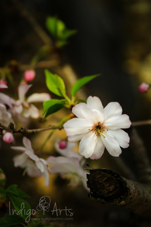 flower in durham nc