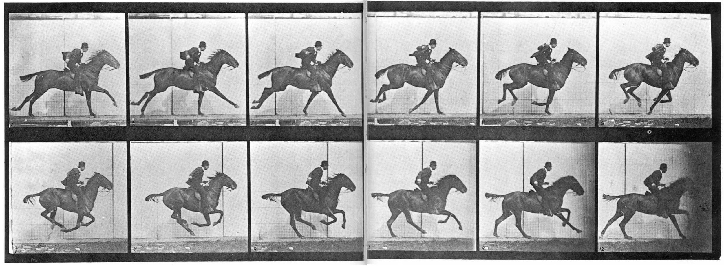 Muybridge_horse_gallop.jpg
