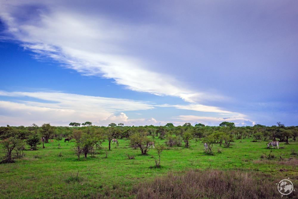 On_Safari_South_Africa.jpg
