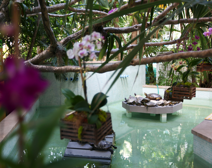 Beautiful orchids and cute turtles welcome you to the property.