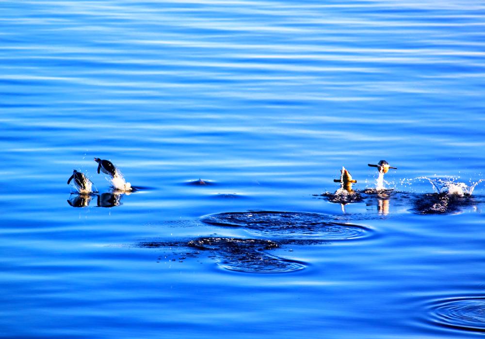 penguinsOnTheRun2sm.jpg