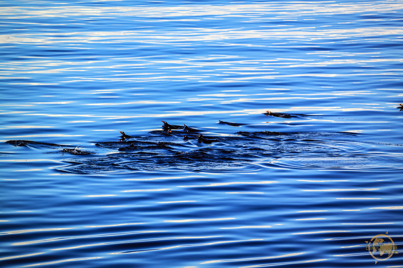 Swimming Penguins in Antarctica by JD Andrews.jpg