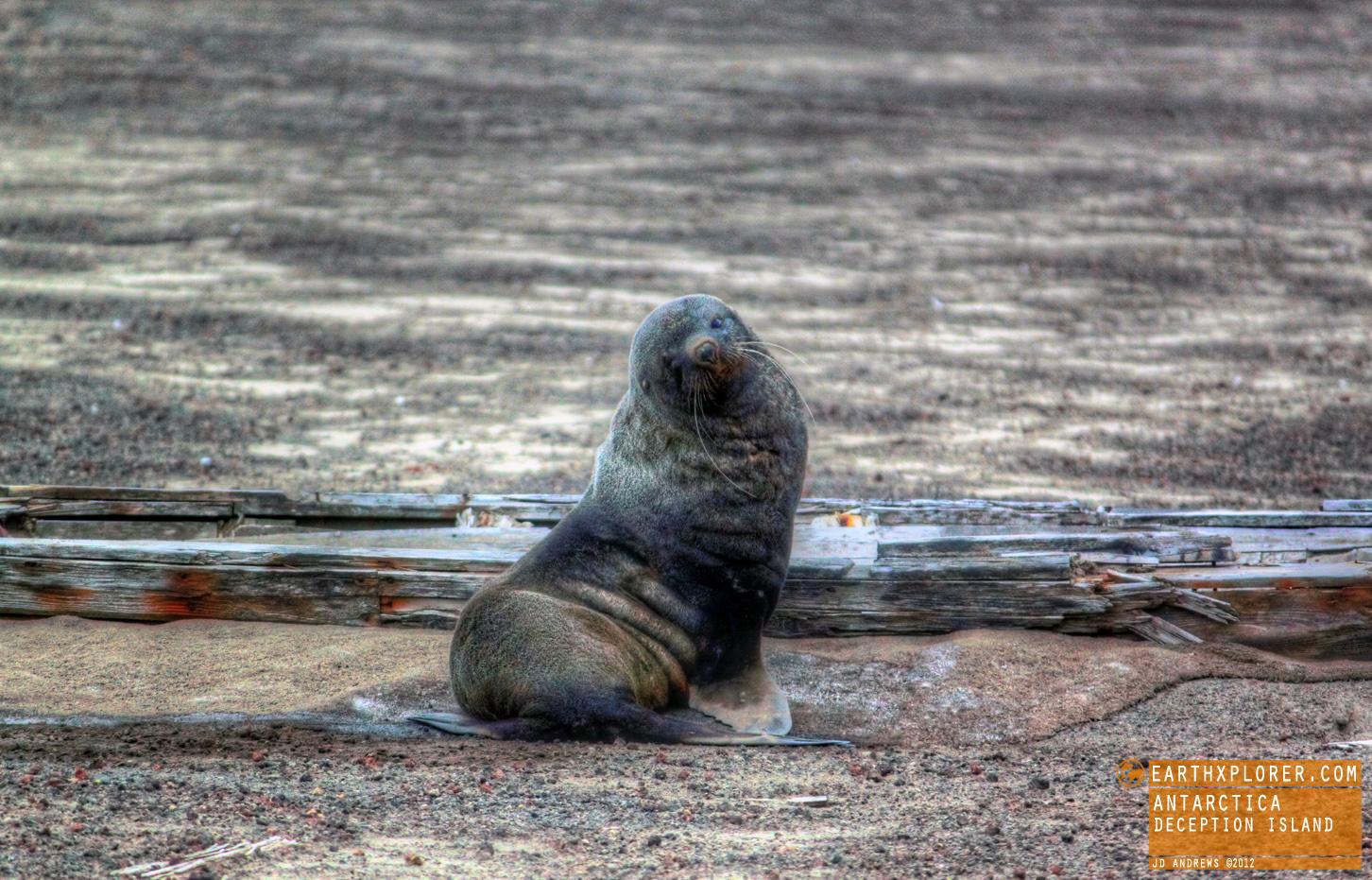 Whalers Bay in Deception Island