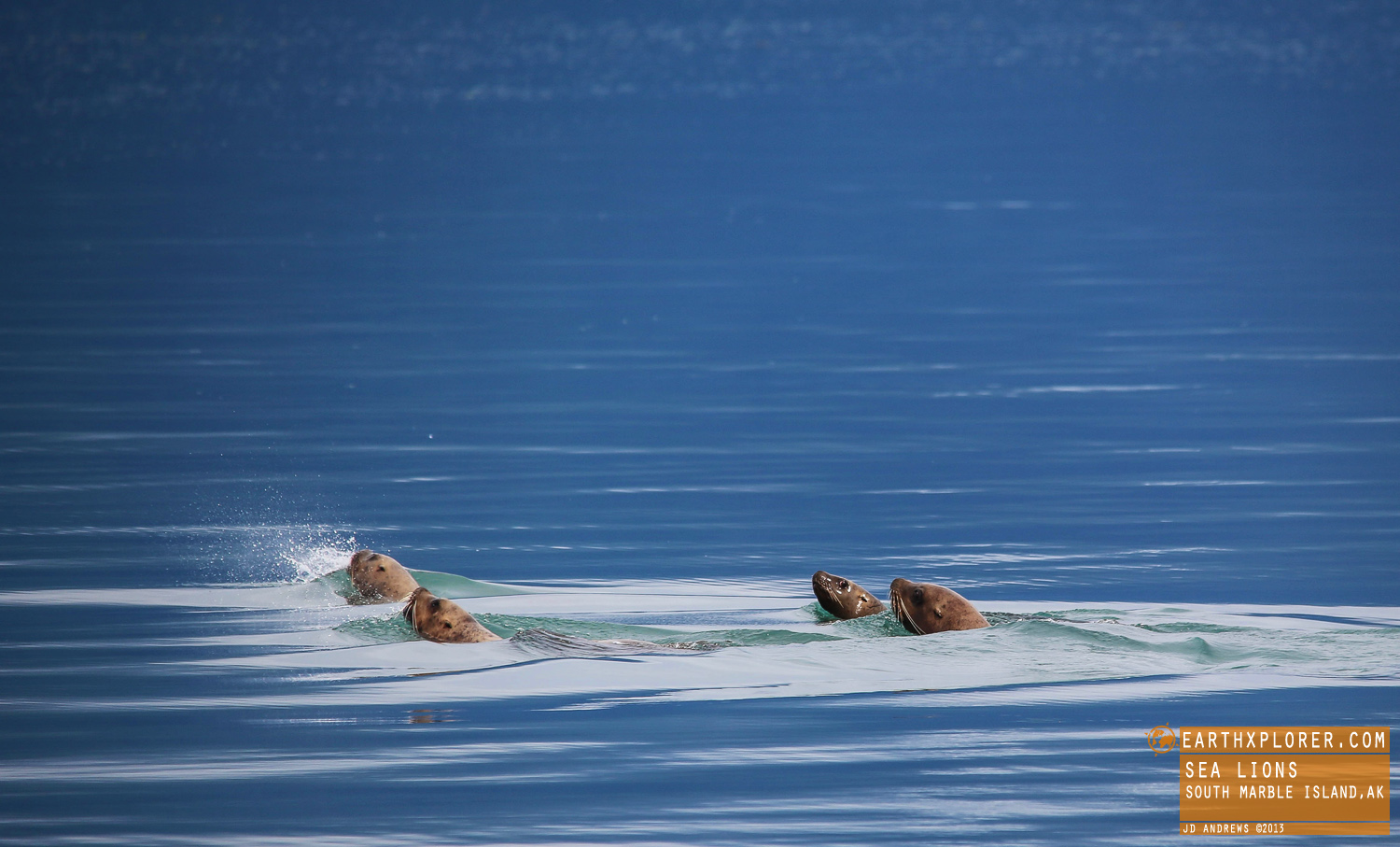 Sea Lions are able to dive down to 1148ft (350 meters) & can stay underwater for five minutes.