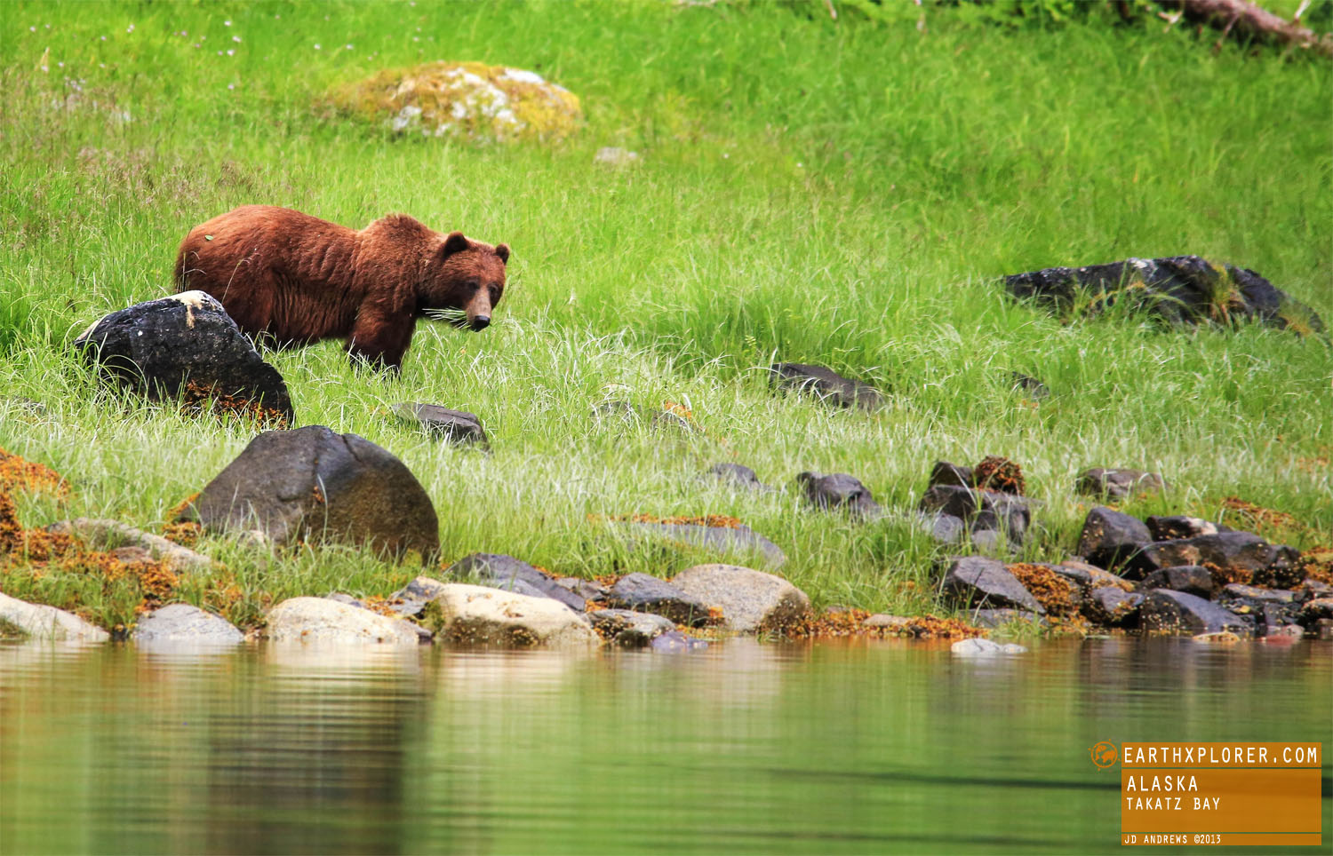 Brown bear claws are longer and less curved than those of black bears.