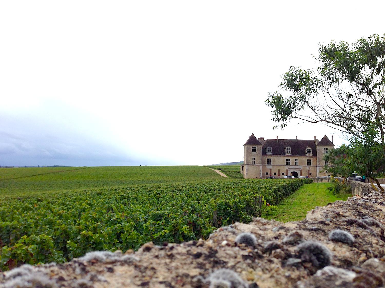 vineyard castle.jpg