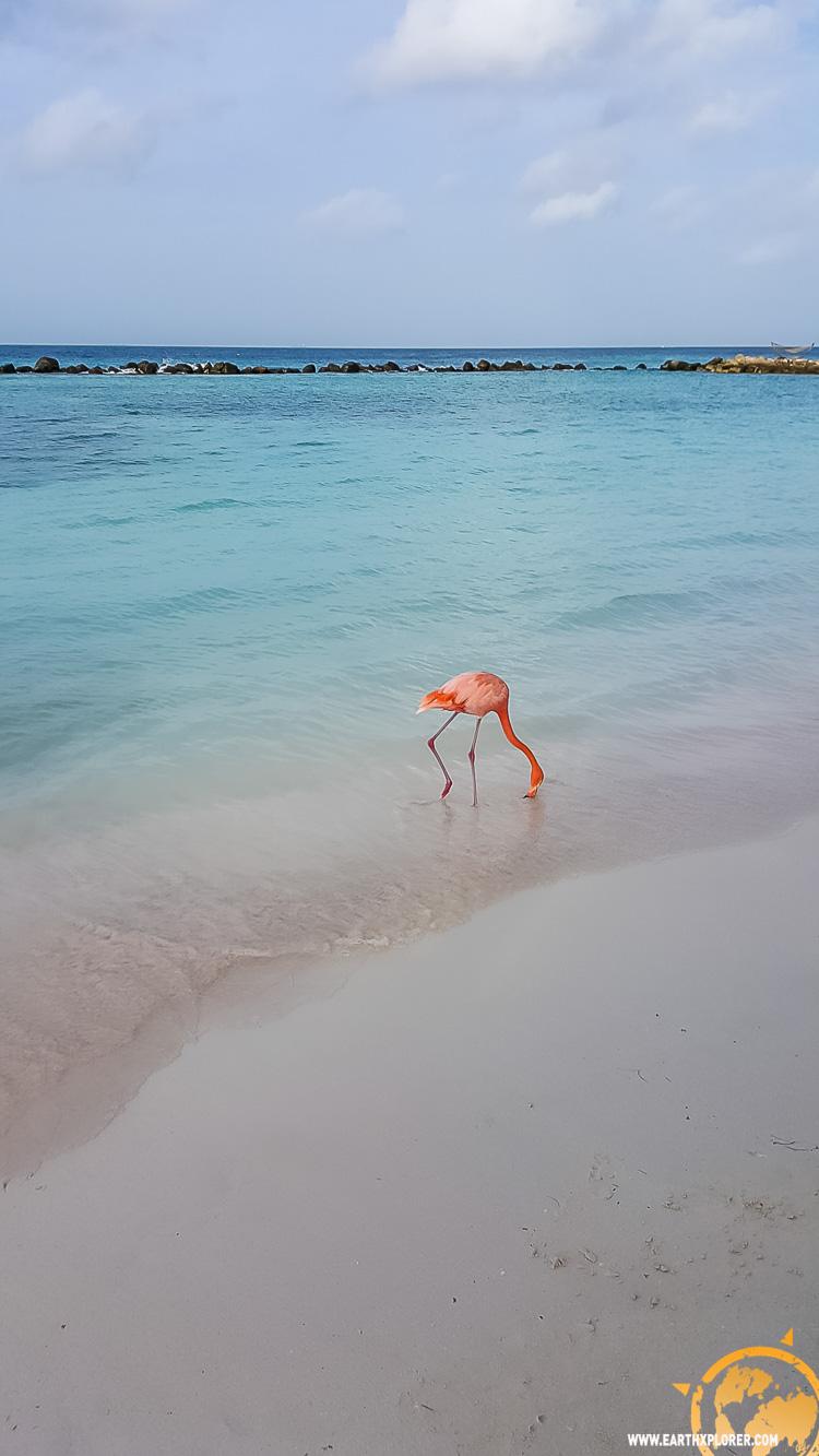 JDAndrews Aruba-36.jpg