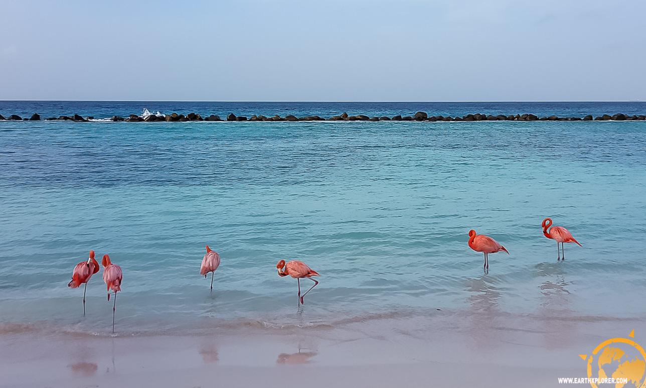 JDAndrews Aruba-32.jpg