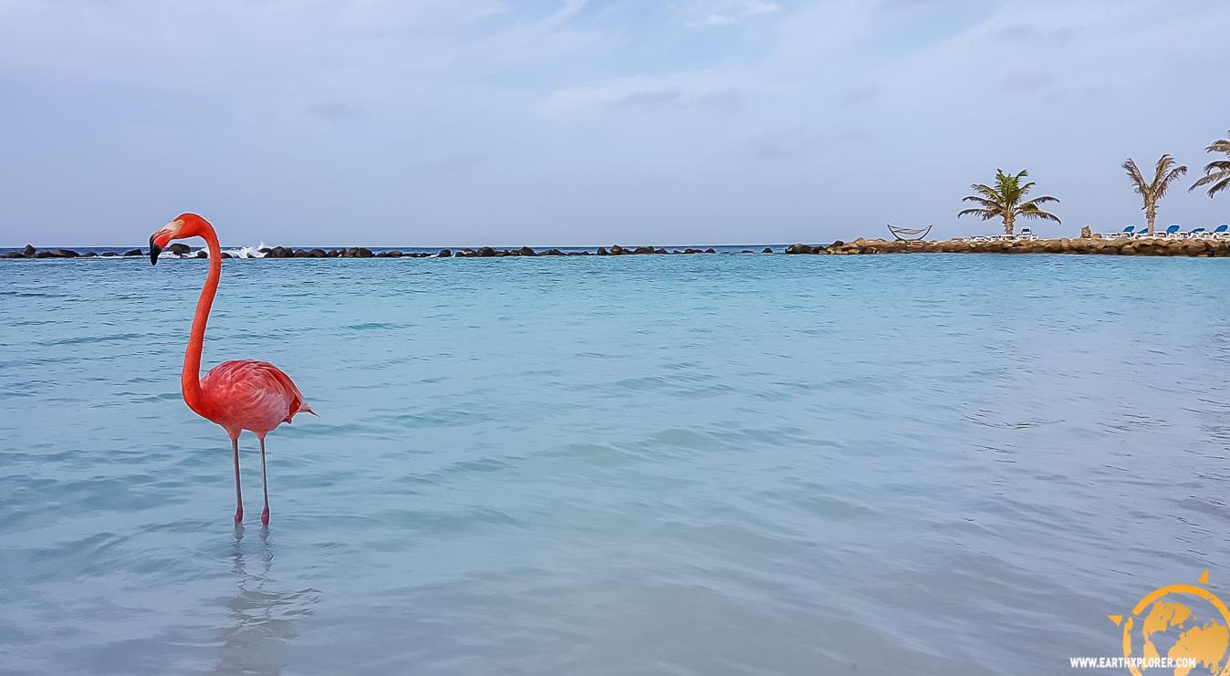 JDAndrews Aruba-31.jpg