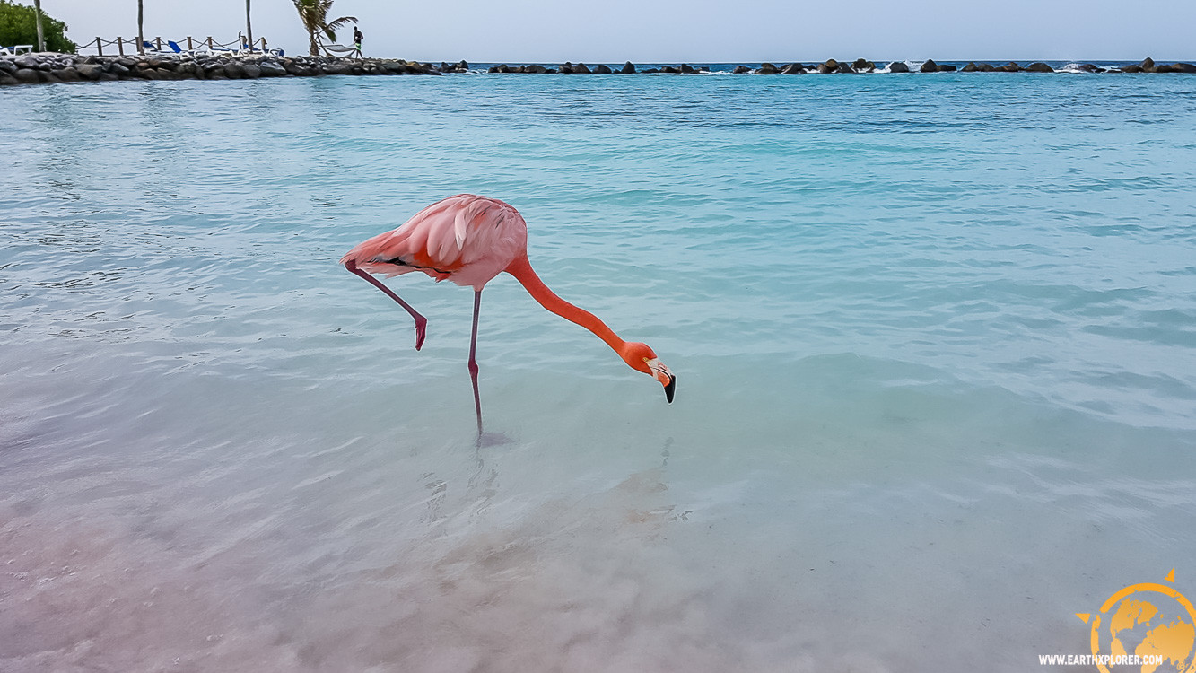 JDAndrews Aruba-28.jpg