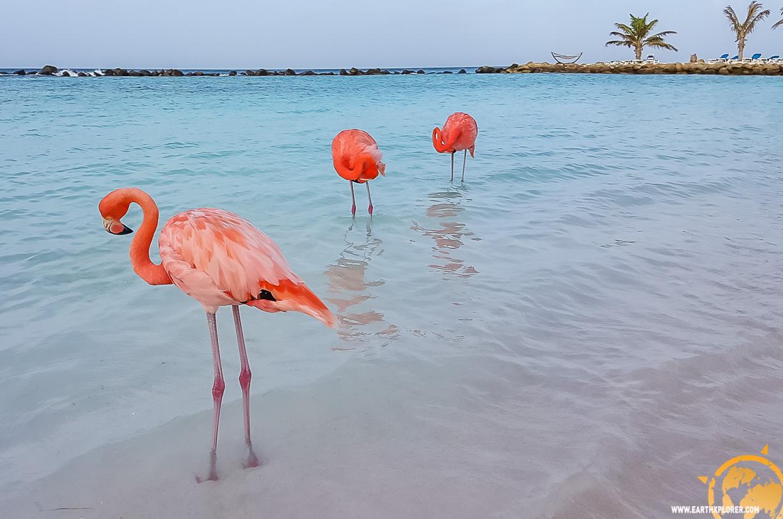 JDAndrews Aruba-27.jpg