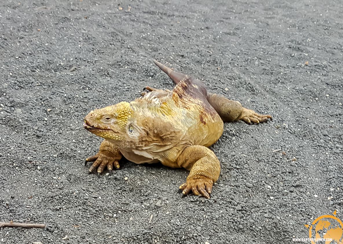 JDAndrews Galapagos-25.jpg