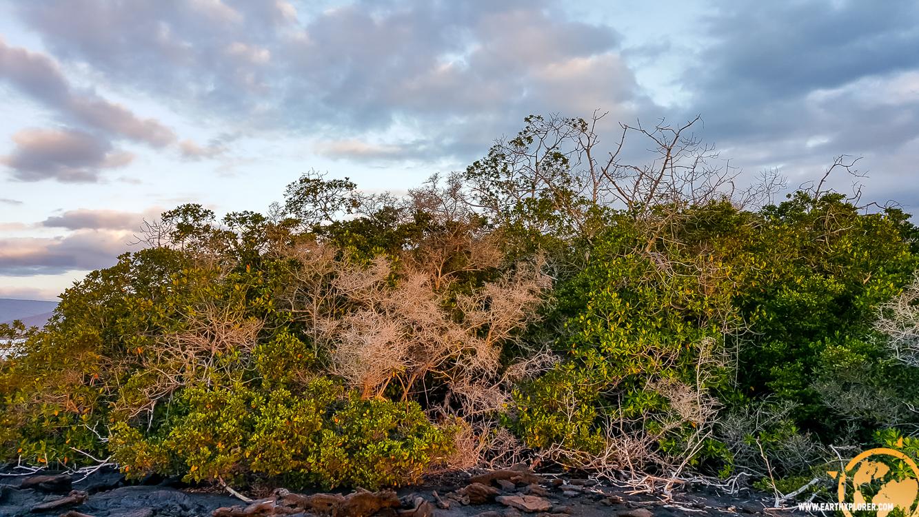 JDAndrews Galapagos-17.jpg