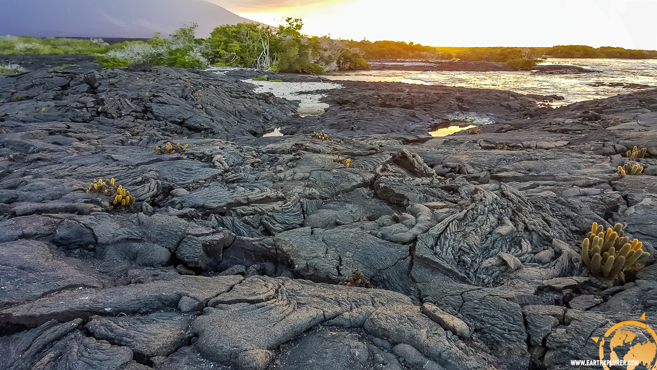 JDAndrews Galapagos-12.jpg