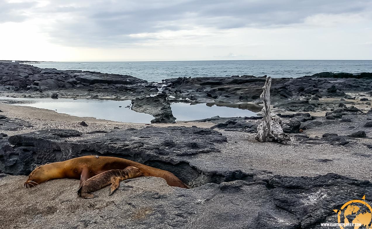 JDAndrews Galapagos-5.jpg