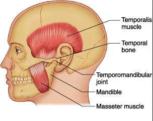 Tmj The Sneaky Symptom Max Remedial Massage And Therapy