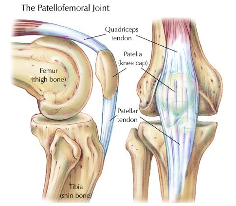 patellorfemoral joint.png