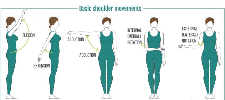 Shoulder movements.png