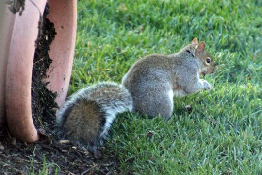squirrrel.jpg