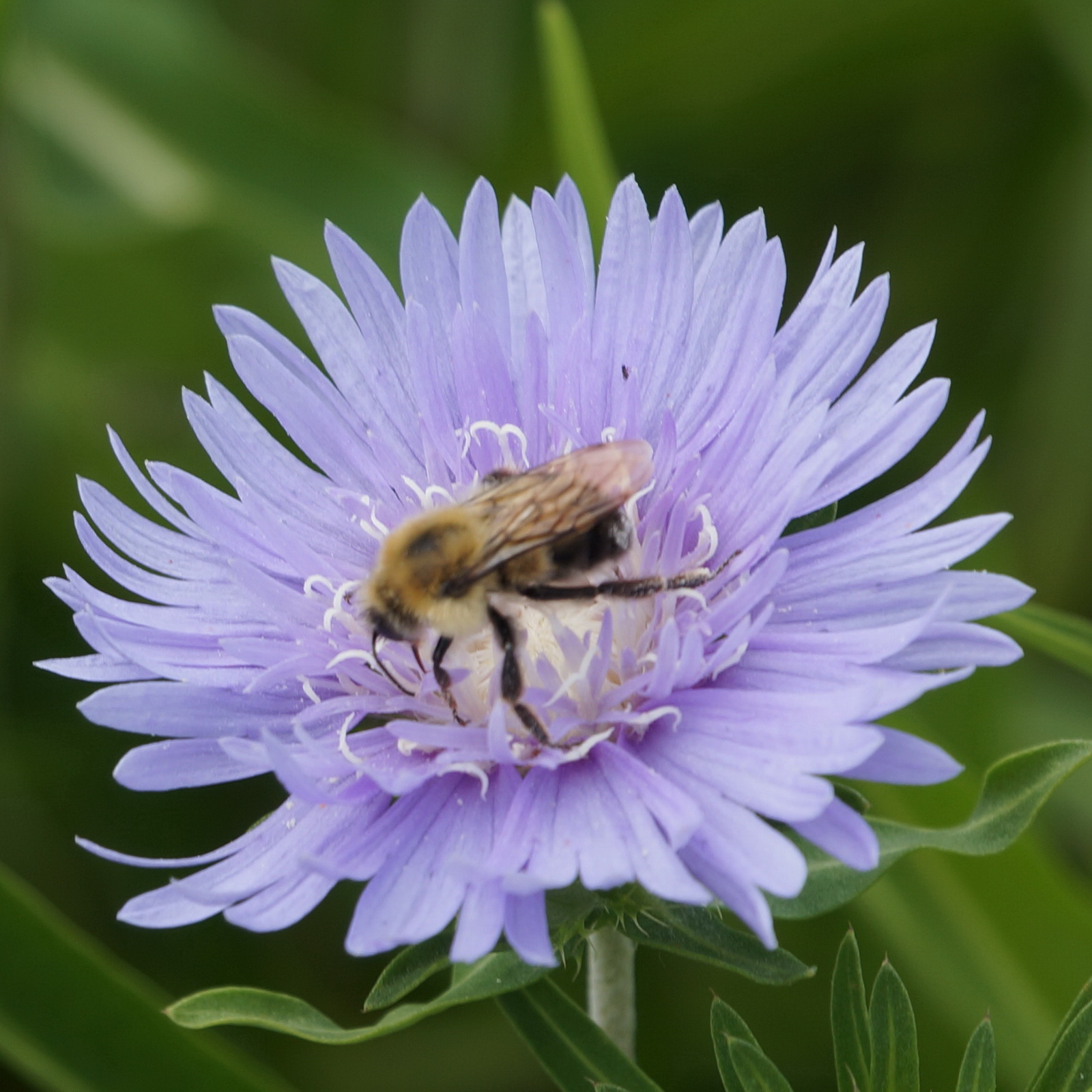 Bee up close_resize.jpg