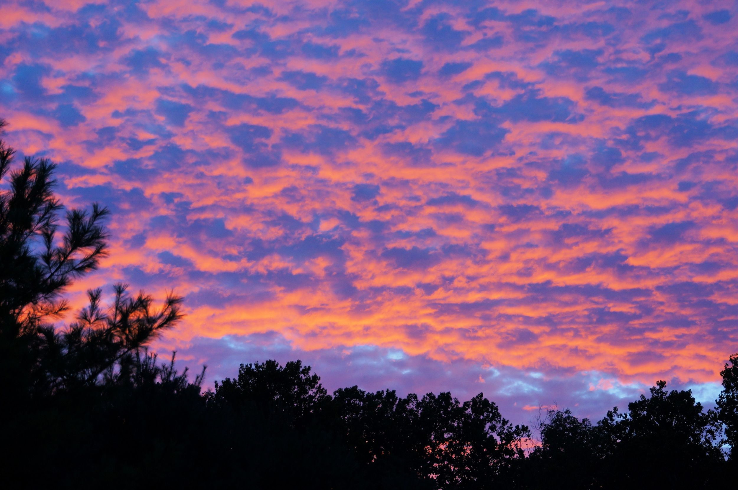 Sunset 5 perf clr.jpg
