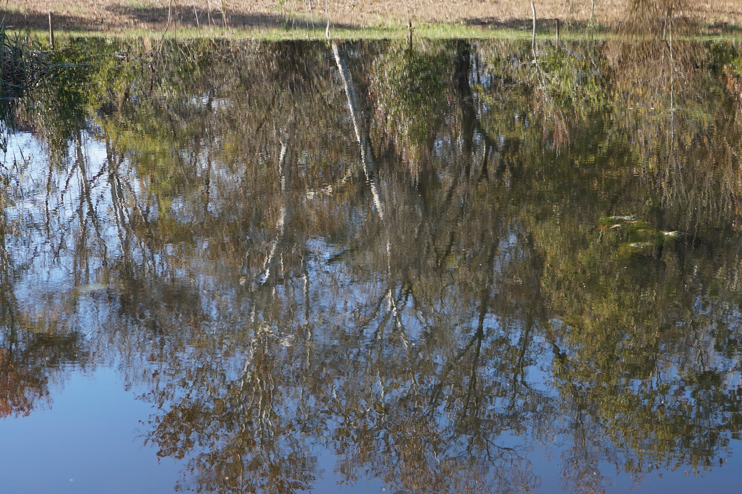 Storm water pond #1 reflection 2_resize.JPG