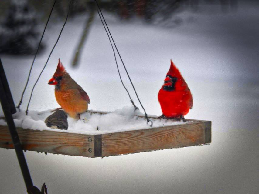 Pair Cardinals