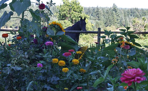 horse-flowers.jpg