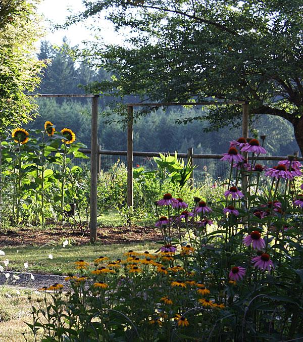 snny_garden.jpg
