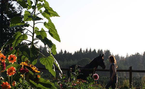 horse-in-flower-garden.jpg