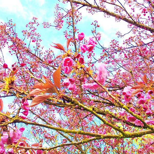 Beautiful springy things everywhere