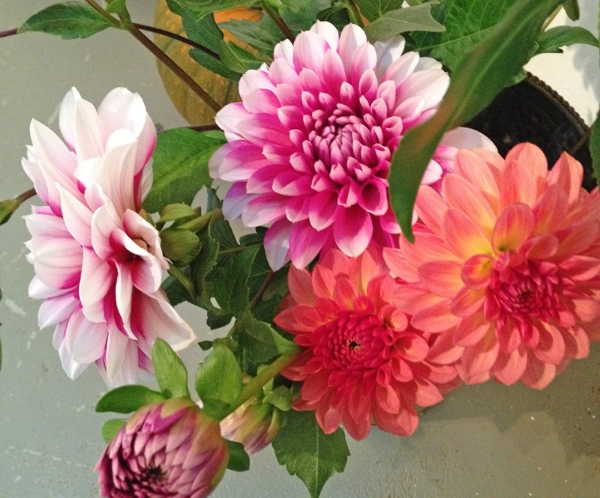 There were still enough summer flowers from the cut flower garden to decorate with beautiful fresh bouquets.