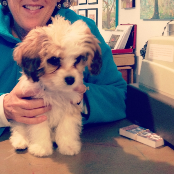 My friend Carole stopped by with her sweet new little puppy, Bailey. Georgie could not wait to smack him on the nose with a great big lick.